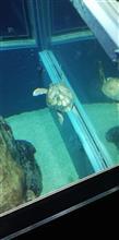 水族館に……シタタタッ ヘ(*¨)ノ