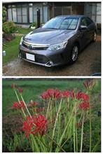 カムリ君 洗車 & 家の周りの花