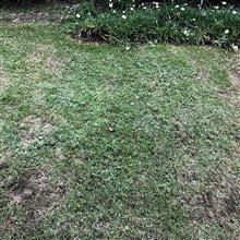 今日は庭の芝生(草)刈り