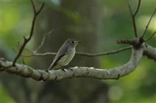 近所のSS公園水場とミズキの実に来る野鳥達