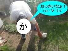 かっちゃん・・・それはあかんぞ! (((( ;゚Д゚)))ガクガクブルブル