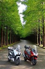 静岡Touring!♪メタセコイア並木と滝で癒やされる♪