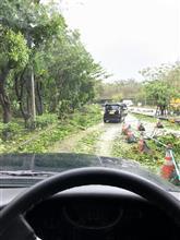 今日の大型台風の爪痕、沖縄の県道はジャングル、マジ運転は恐ろしい((( ;゚Д゚)))ガクガクブルブル