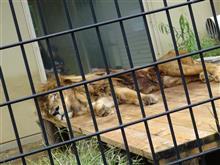 動物園にいってみた!