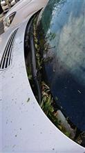 台風通過後・・・洗車に行きました♪