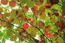 風景に木がある・・・ポップな葉ァート
