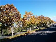 もう、秋! ・・・ すぐ、冬!