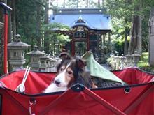 先週の土曜日は、アルぼんと三峰神社に行ってきました♪(アルぼん写真多め