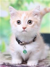 愛猫ヒフミンの写真紹介