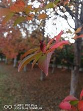 大きい秋見つけた