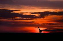 うちの三男、ケニアでこんな景色、見れてるだろうか・・・。