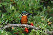 みんともさんと、野鳥探しで、近隣公園 トリプルヘッダー (^-^;
