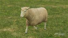 【FH4】羊の皮を被った的な?