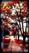 紅葉の季節、