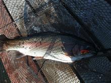 昨日の続きの釣り