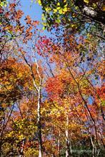 紅葉に包まれて南沢山/横川山