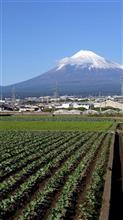 緑の畑と青空の富士山