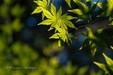 秋晴れの花さんぽ Vol.2