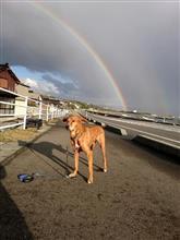 虹のきな散歩。