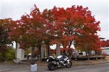 S1000Rで高野山の紅葉をみる