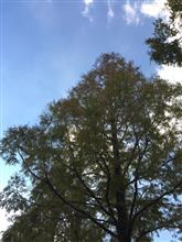 Good Autumn day