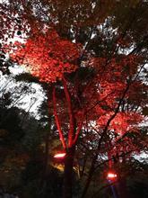 紅葉を求めてリベンジ