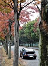 紅葉の始まった欅街道を行く