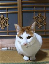 旅猫リポート見て来ました。