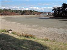 池の水全部・・・抜かれていました。(^Д^)