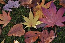 函館の秋 その2 大沼公園で紅葉を求めて・・・・