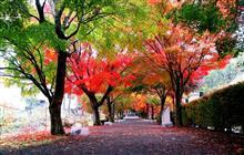 朝からシトシト雨の紅葉