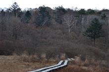 横根山.井戸湿原.特別天然記念物に遭遇 2018.11.10 PS250