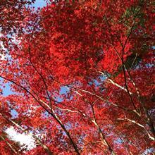平成最期の紅葉狩り