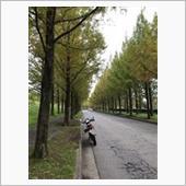 金沢メタセコイア並木に