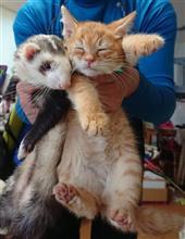 仔猫を保護した