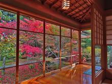 紅葉の日月カフェ