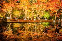 岐阜県土岐市 曽木公園 「曽木公園もみじライトアップ」