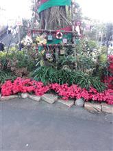 ロスト・リバー・デルタはクリスマス模様に?