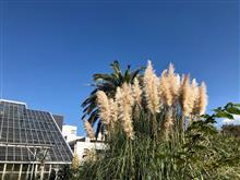 筑波実験植物園に行ってきた