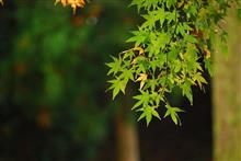 週末日記43 ~ 紅葉を楽しみに千如寺大悲王院へ ~