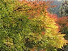 四季桜と三河山間部