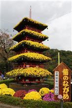 関東菊花大会