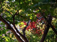 秋の深まりを感じた神代植物公園