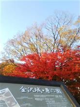 金沢の紅葉も真っ盛り