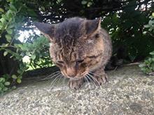 猫オフ (プチ)  2018.12.01👍