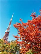 東京タワーと芝公園の紅葉、見頃でした