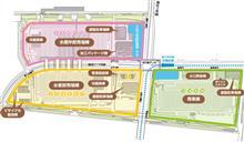 豊洲市場を見学。