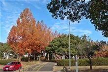 ワンコとお出掛け〜メタセコイア並木へお散歩