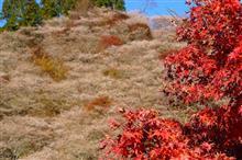秋を探しに♪2018 ⑨小原四季桜祭り