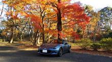 松島にドライブに行きました。